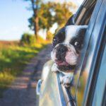 家計を見直すなら自動車保険!代理店型とダイレクト型の両方を契約したから分かるネット自動車保険のメリット。